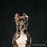 Adopt A Pet :: Natasha - Houston, TX
