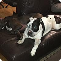 Adopt A Pet :: Manny - Grand Rapids, MI