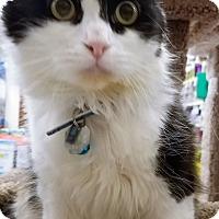 Adopt A Pet :: Penelope - Salt Lake City, UT