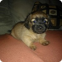 Adopt A Pet :: Exera - Marlton, NJ