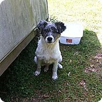 Adopt A Pet :: KIWI - ROCKMART, GA