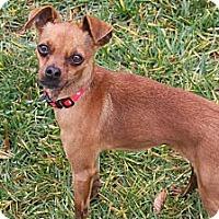 Adopt A Pet :: ZEEBO - Mission Viejo, CA