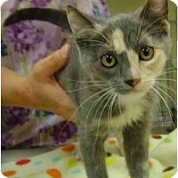 Adopt A Pet :: Tina - Modesto, CA