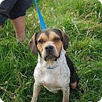 Adopt A Pet :: PollyAnna - Albany, NY