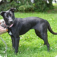 Adopt A Pet :: Zeeva - Springfield, IL