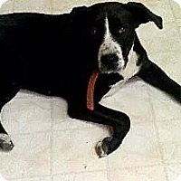 Adopt A Pet :: Roxie - Chewelah, WA