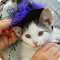 Adopt A Pet :: Peter - N. Billerica, MA