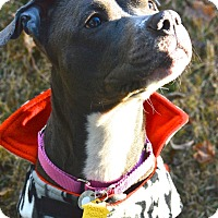 Adopt A Pet :: Blueberry - Park Ridge, NJ
