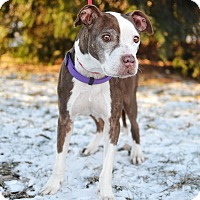 Adopt A Pet :: Posey - Springfield, IL