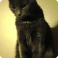 Adopt A Pet :: Clair - brewerton, NY