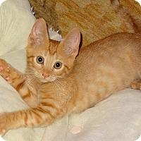 Adopt A Pet :: Herman - Bentonville, AR