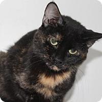 Adopt A Pet :: Annie - Caistor Centre, ON