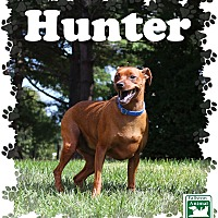 Adopt A Pet :: Hunter - Fallston, MD