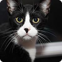 Adopt A Pet :: Elwood - Frankfort, IL