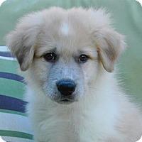Adopt A Pet :: Leroy - Austin, TX