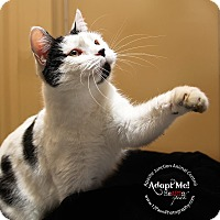 Adopt A Pet :: Molly - Apache Junction, AZ