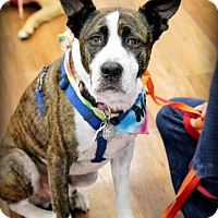 Adopt A Pet :: Mac - Ft. Lauderdale, FL