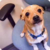 Adopt A Pet :: Noe - Meridian, ID