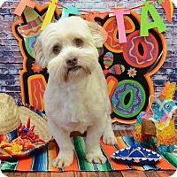 Adopt A Pet :: Hamster Montgomery - Urbana, OH