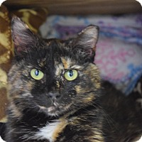 Adopt A Pet :: Honey - Pottsville, PA