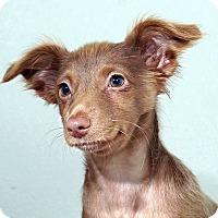 Adopt A Pet :: Anna Mae - Sudbury, MA