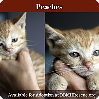 Adopt A Pet :: Peaches - Temecula, CA