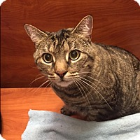 Adopt A Pet :: Lewis - Cranford/Rartian, NJ