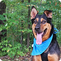 Adopt A Pet :: Rocky - New Castle, PA