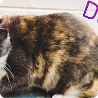 Adopt A Pet :: Dolly - Crown Point, IN