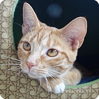 Adopt A Pet :: Bonnie Bell - Greenfield, IN