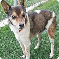 Terrier (Unknown Type, Small) Mix Dog for adoption in Fruit Heights, Utah - Mr Watson