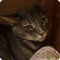 Adopt A Pet :: Kix - Grayslake, IL