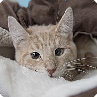 Adopt A Pet :: Ross - Wilmington, DE