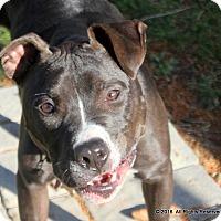 Adopt A Pet :: Max - Fort Wayne, IN