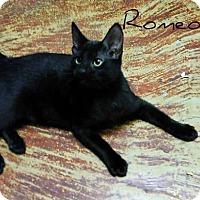 Adopt A Pet :: Romeo - Laplace, LA