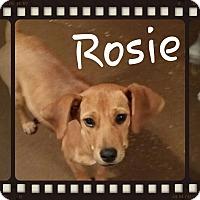 Adopt A Pet :: Rosie (DC) - Allentown, PA