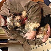 Adopt A Pet :: Pluton - Salem, OR