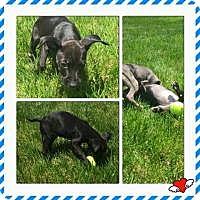 Adopt A Pet :: Adorable Addy - Marlton, NJ