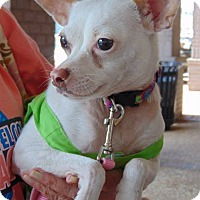 Adopt A Pet :: Sugar - Memphis, TN