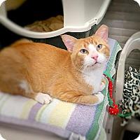 Adopt A Pet :: Jake - Lakewood, CO