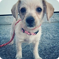 Adopt A Pet :: Eloise (Adoption Pending) - Bristol, CT
