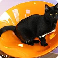 Adopt A Pet :: Asia - Ann Arbor, MI