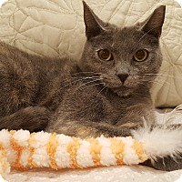 Adopt A Pet :: Mary Jane - Staten Island, NY