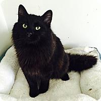 Adopt A Pet :: Austin - Addison, IL