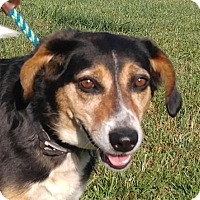 Adopt A Pet :: Hanna Girl - Harrisonburg, VA