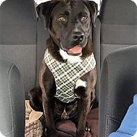 Adopt A Pet :: Roger~meet me~new pics! - Glastonbury, CT