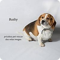 Adopt A Pet :: Busby - Chino Hills - Chino Hills, CA