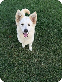 Husky Mix Dog for adoption in Crystal Lake, Illinois - Winnie