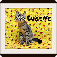 Adopt A Pet :: Eugene - Tracy, CA