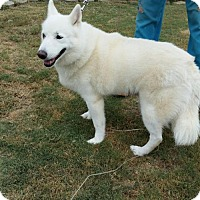Adopt A Pet :: Halo - Bristol, VA